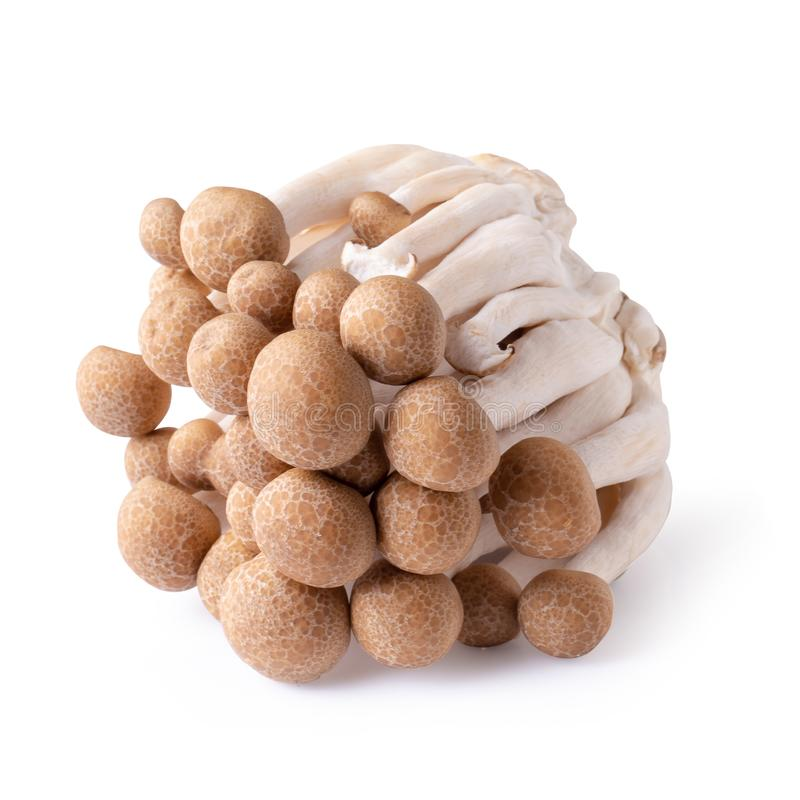 shimeji mushrooms brown varieties isolated over white background royalty free stock image