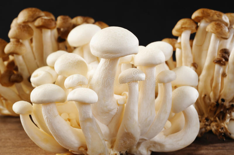 Shimeji mushrooms royalty free stock images