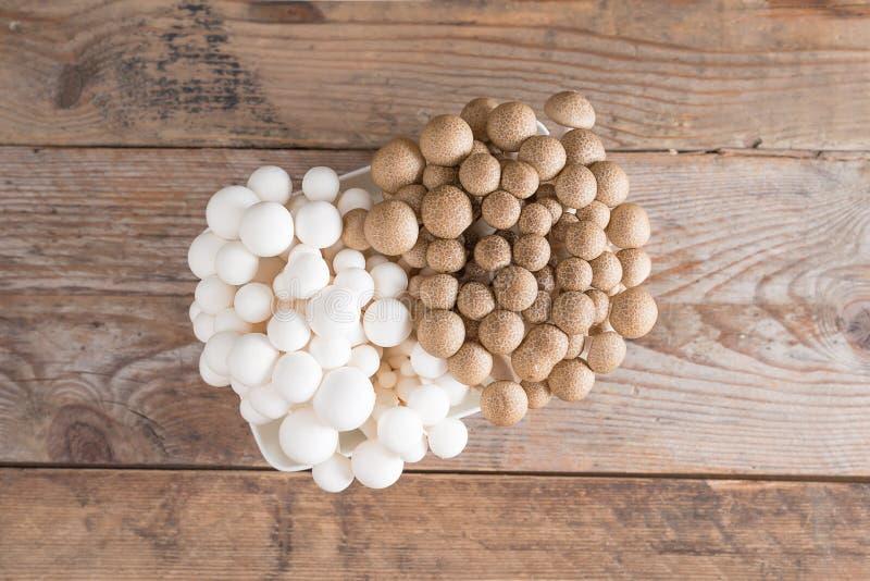 Shimeji répand des variétés brunes et blanches Vue supérieure photos stock