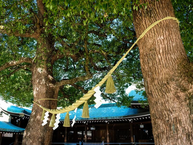 Shimenawa, a holy rope circle between trees in Japanese temple stock photo