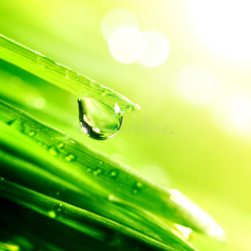 Download Shine water drop stock photo. Image of climate, blade - 8871604