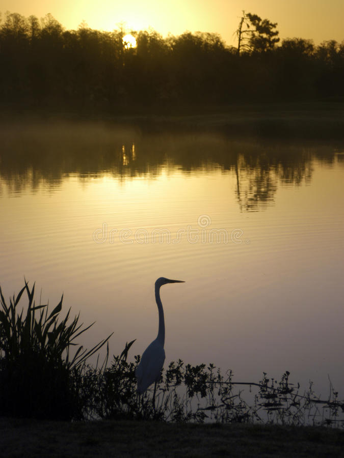 Shingle Creek at Dawn royalty free stock photos