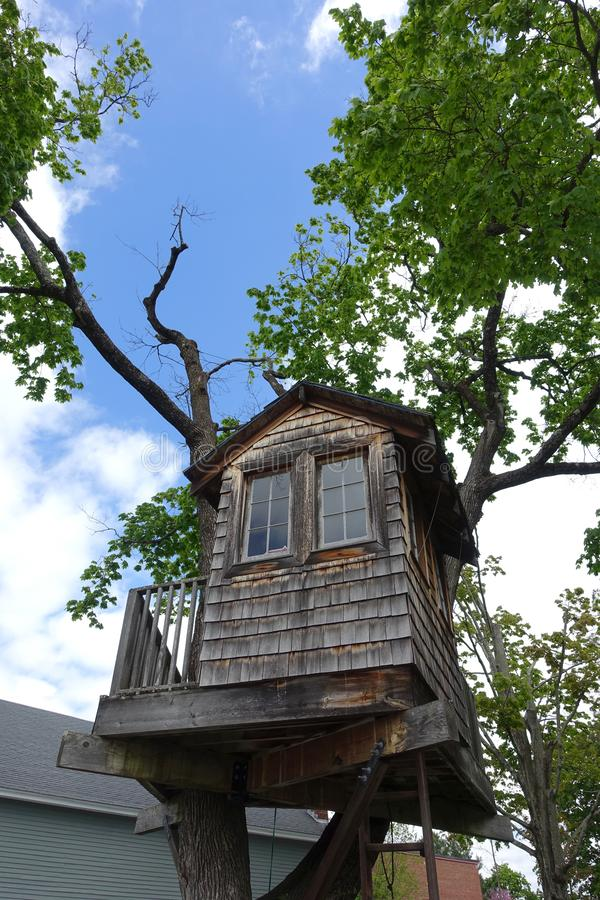 Shingled Treehouse Up in a Tree. A Shingled Treehouse with Windows Tucked in a Tall Tree royalty free stock image