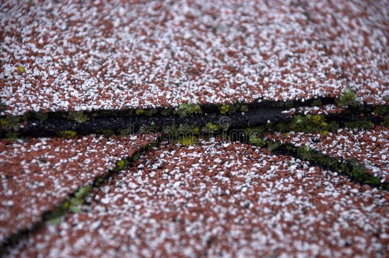 shingles för tak för moss för skadehusform royaltyfria foton