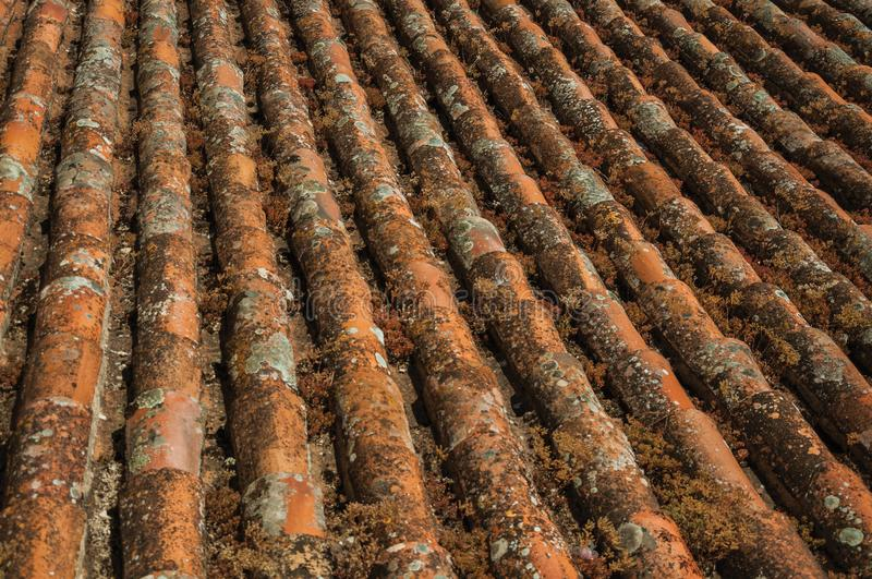 shingles on roof covered by moss and lichens stock photo