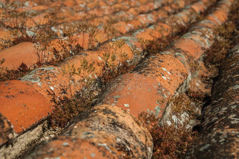 shingles on roof covered by moss and lichens royalty free stock image