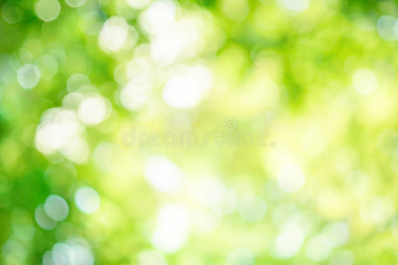 Shining defocused highlights in trees. Shining out-of-focus highlights in green leaves create a bright bokeh composition, ideal as a nature background stock photos