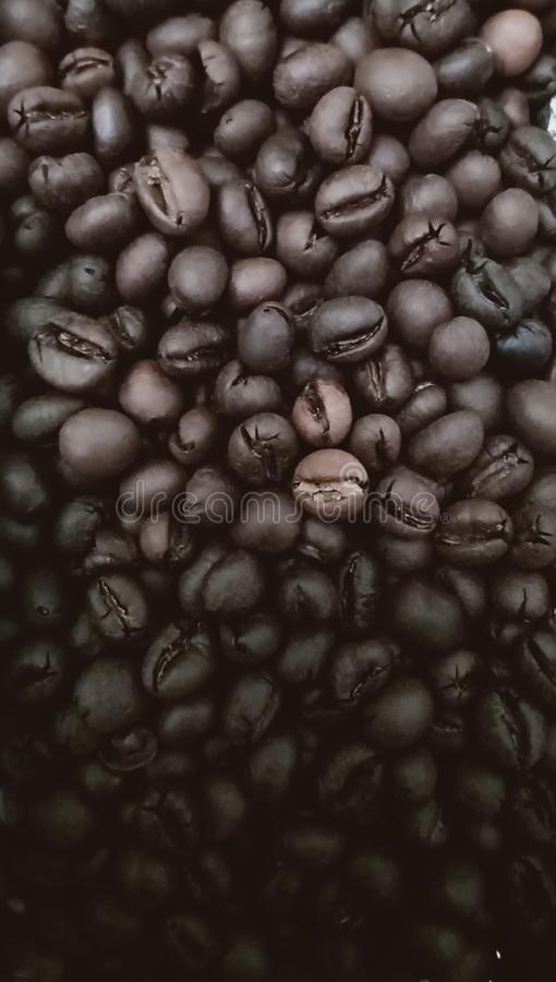 Shining fresh Brown coffee beans background in gradient. Close, closeup stock image