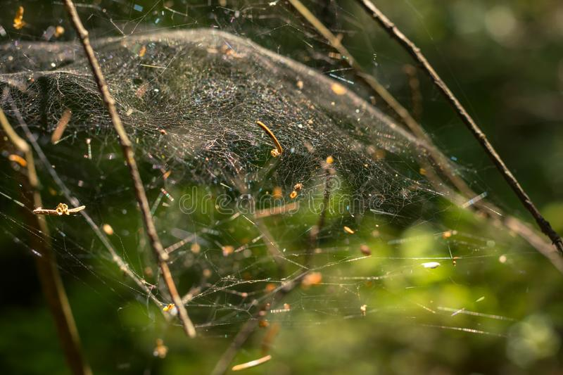 Shining in the sun cobweb, which fell into small mote from trees and plants in the forest stock image