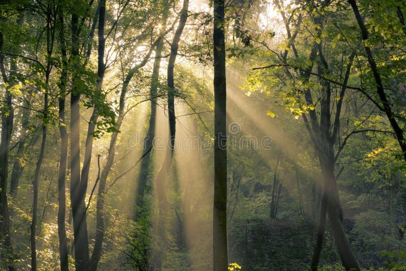 Shining through trees stock image