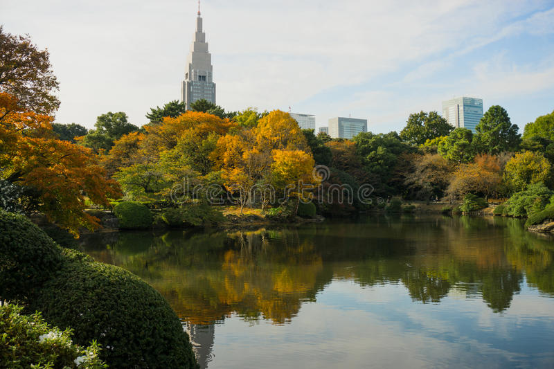Shinjuku Gyoen ogród zdjęcie royalty free