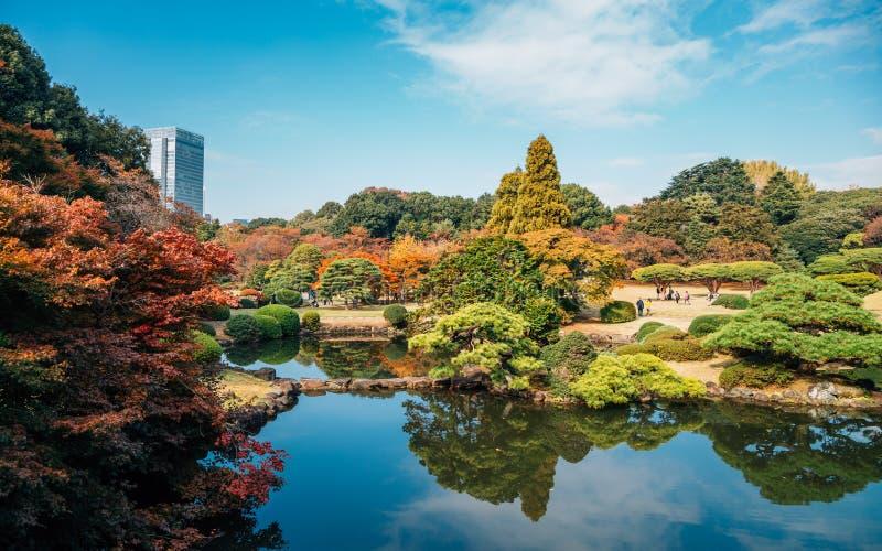 Shinjuku Gyoen park at autumn at Tokyo, Japan. Shinjuku Gyoen park at autumn in Tokyo, Japan royalty free stock images