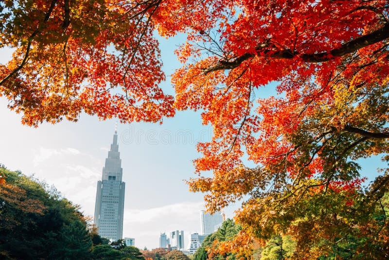 Shinjuku Gyoen park at autumn at Tokyo, Japan. Shinjuku Gyoen park at autumn in Tokyo, Japan stock photo