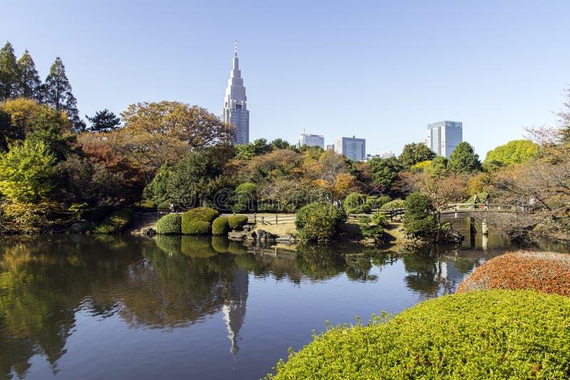 Shinjuku Gyoen park. Shinjuku Gyoen Garden in Tokyo : autumn season royalty free stock images