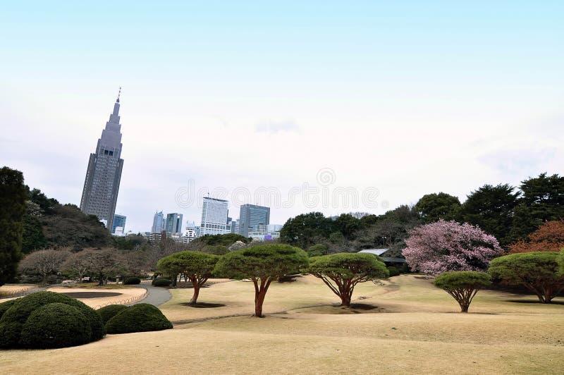 Shinjuku Gyoen (Tokyo, Japan). A Sakura (cherry blossom) tree at Shinjuku Gyoen National Garden at Tokyo (Japan). The buildings at the background are buildings stock photo