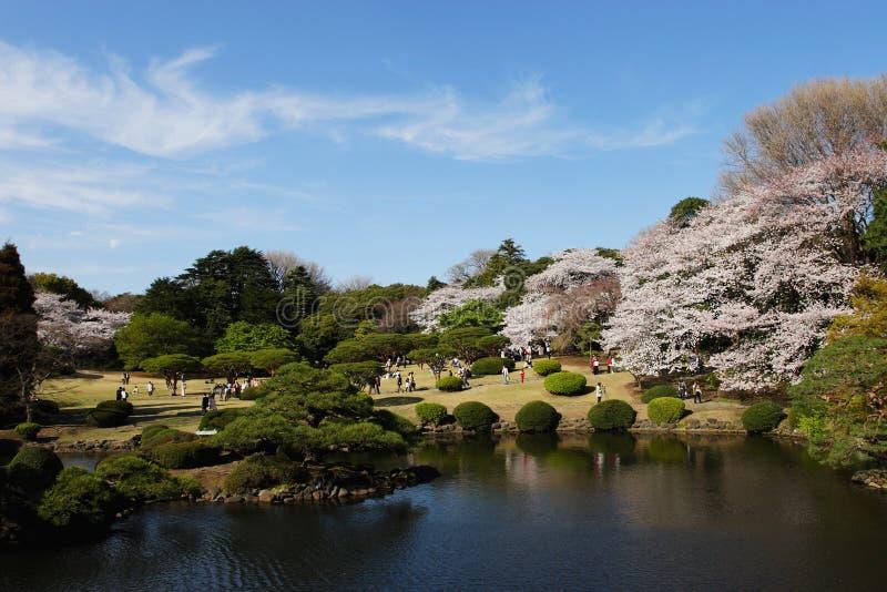 Shinjyuku Gyoen nationaler Garten im Frühjahr stockbilder