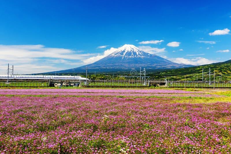 Shinkansen mit Mt Fuji und Shibazakura lizenzfreie stockbilder