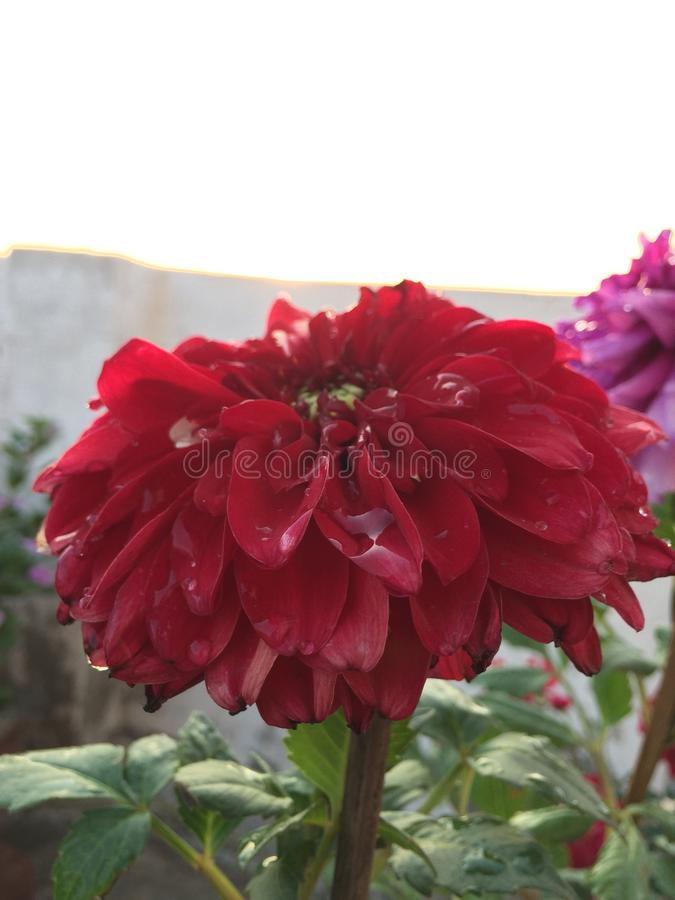 Shinning цветок стоковое изображение rf