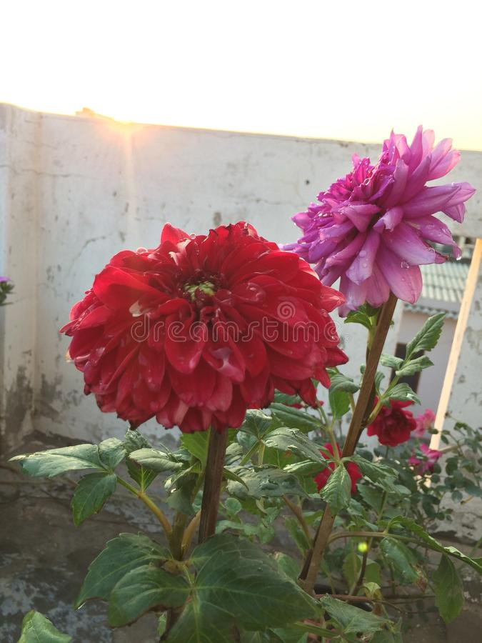 Shinning blomma royaltyfri foto