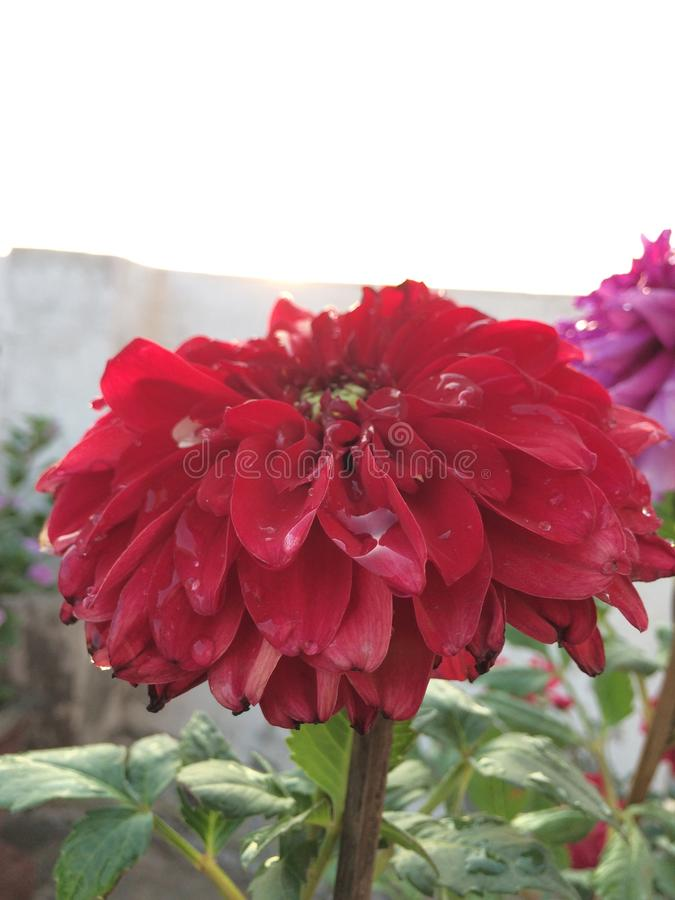 Shinning blomma royaltyfria foton