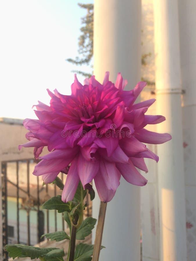 Shinning blomma royaltyfria bilder