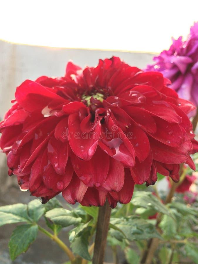Shinning blomma royaltyfri fotografi