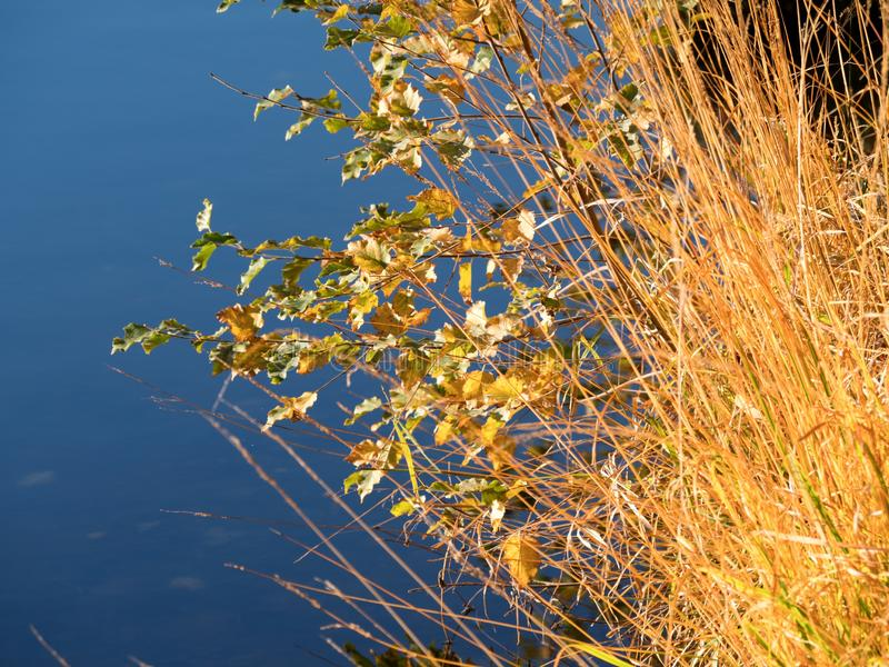 Shinning långa grässamtal på sjökust royaltyfri foto