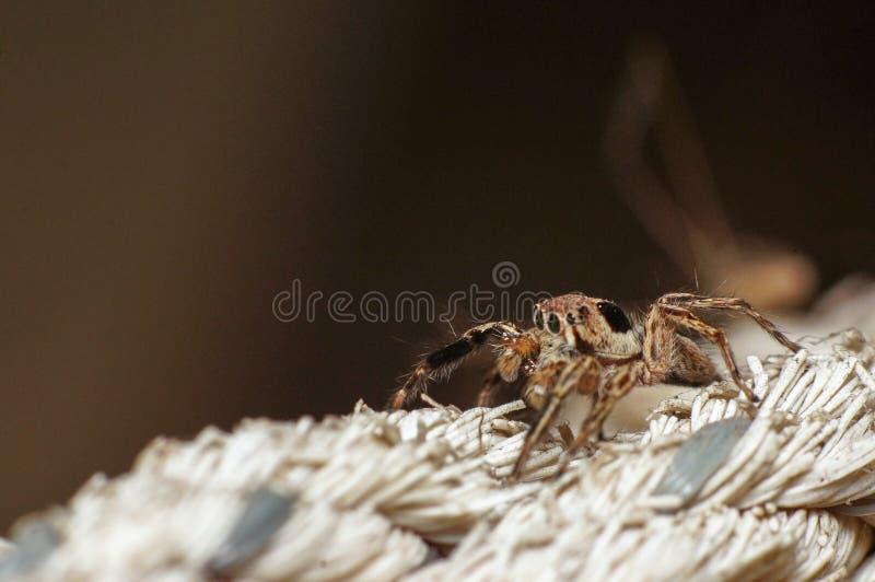 Shinny le macro haut étroit de tir d'araignée sur la corde en gardant la chambre photographie stock libre de droits
