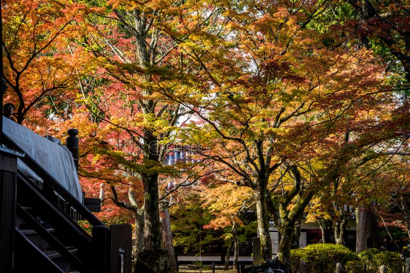 Shinnyodo-Herbst stockbild