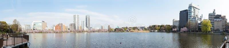 Shinobazuvijver met omringde sakurabloesems royalty-vrije stock afbeelding