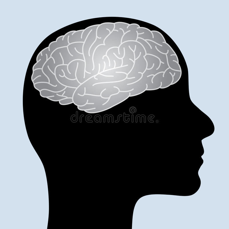 Download Shiny brain stock vector. Image of central, line, intellect - 14609278