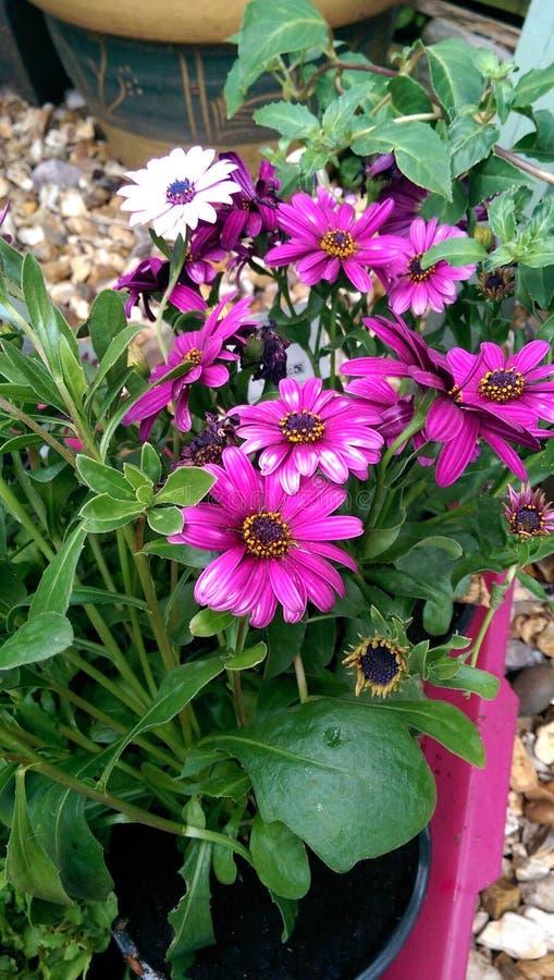 Shiny flowers stock photos