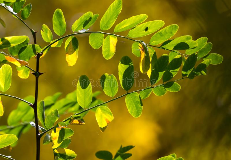 Shiny foliage with a little fly silhouette. stock image
