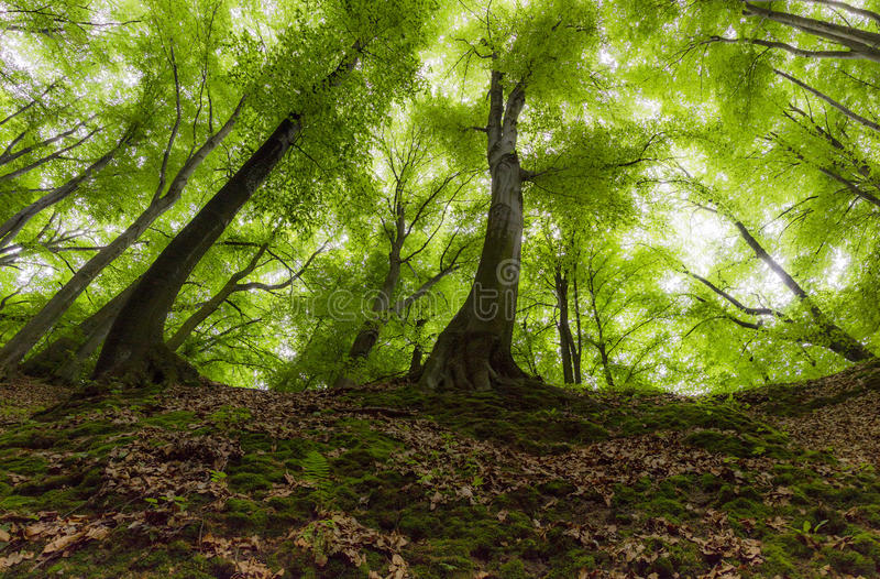 Shiny Forest Stock Photography