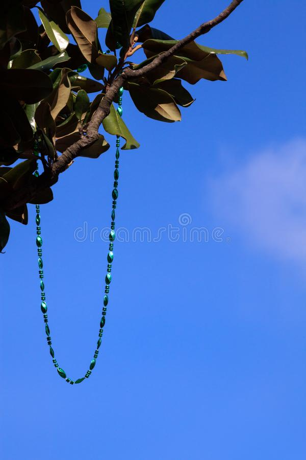 A Mardi Gras Bead Necklace Dangles in a Tree. A shiny green necklace dangles in a tree. Set against a blue sky, the sunlit beads symbolize the festivity of a royalty free stock images