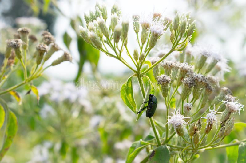 Shiny nature, white flowers and little insect stock image