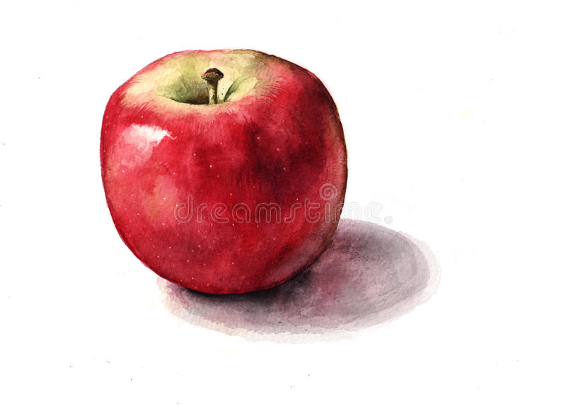 Shiny Red Apple. Hand painted, watercolour red apple royalty free illustration