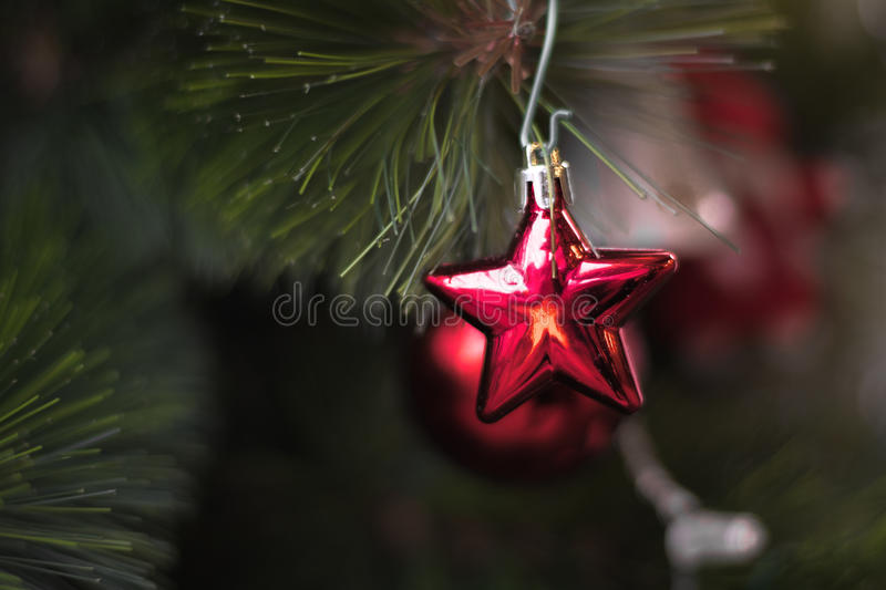 Shiny red star christmas decoration hanging on green pine tree stock images