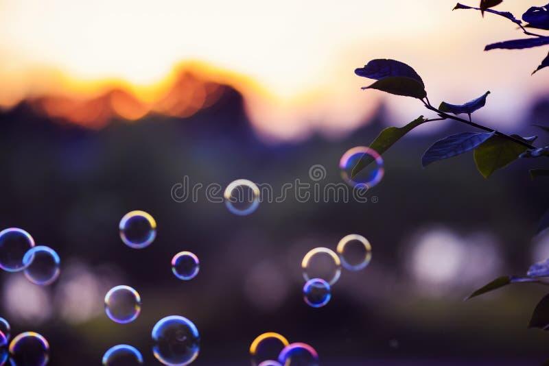 Shiny soap bubbles flying over sunset purple bright sky in summer Park. Beautiful shiny soap bubbles flying over sunset purple bright sky in summer Park stock image
