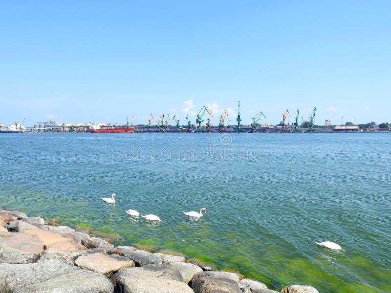 White seagull in Klaipeda town port, Lithuania stock photos
