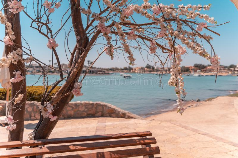 A ship with people driving in a lagoon El Gouna, egypt with a view through a tree with flowers royalty free stock photography