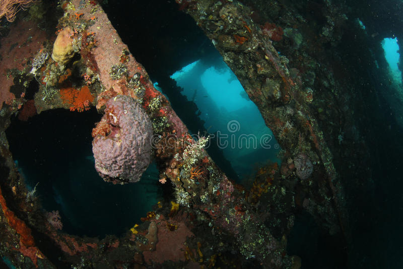 Ship wreck. Inside a shipwreck that is becoming slowly an artificial reef with a sponge growing on a metal post royalty free stock photos