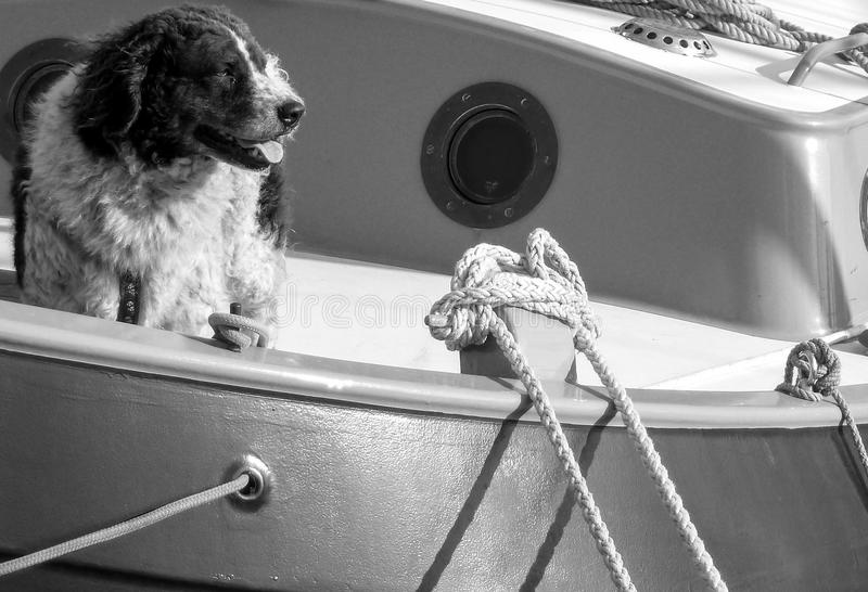 Shipdog que aprecia as vistas fotografia de stock royalty free