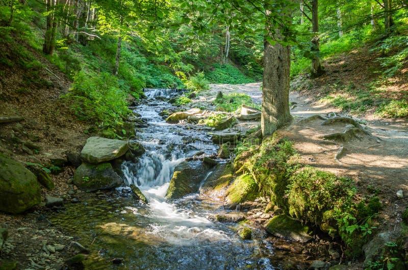Shipot siklawa na halnej rzece wśród kamieni i skał w Ukraińskich Carpathians zdjęcie royalty free