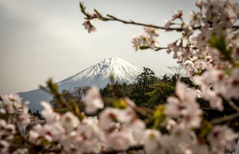 Shiraito Spada Japonia - Fuji - obraz stock