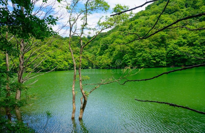 Shirakami-Sanchi en Aomori, Japón foto de archivo libre de regalías