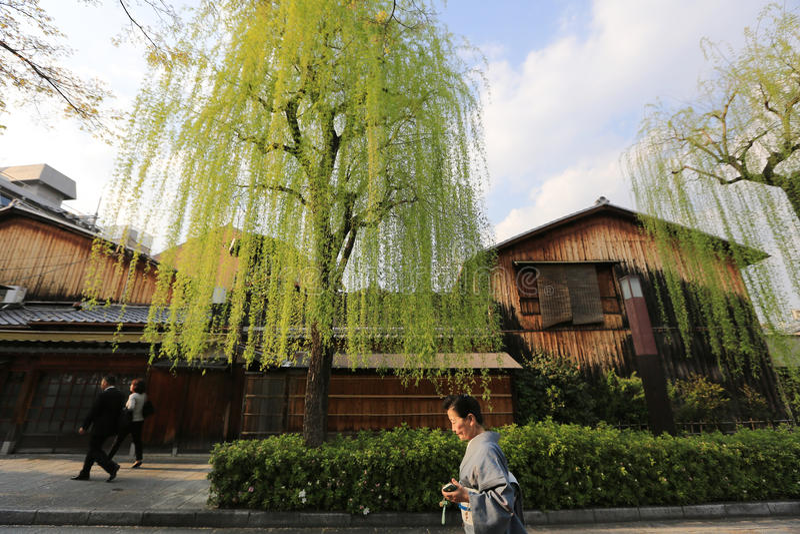 Shirakawa-minami Dori à Kyoto, Japon photographie stock libre de droits