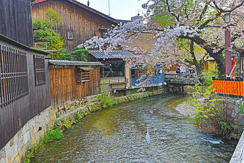 Shirakawa-minami Dori i Kyoto, Japan royaltyfri foto