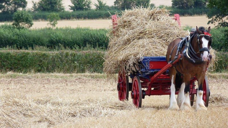 Shire το άλογο με το βαγόνι εμπορευμάτων αχύρου στη χώρα παρουσιάζει στοκ φωτογραφία