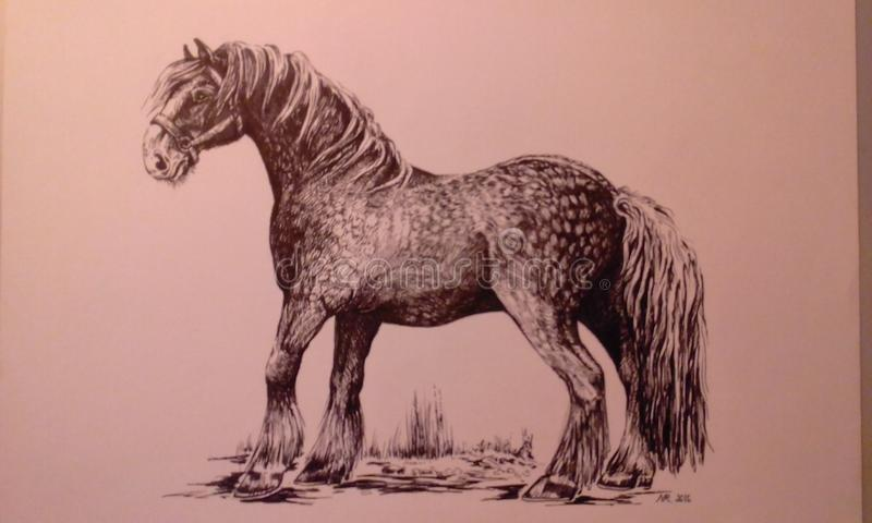 Shire horse  graphic work stock images
